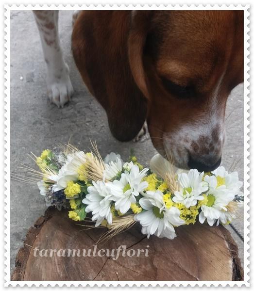Coronite cu crizanteme.0010