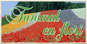 Taramulcuflori.ro