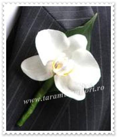 Cocarde nunta din orhidee phalaenopsis.212