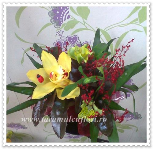 Aranjamente florale din lalele-frezii-orhidee.614