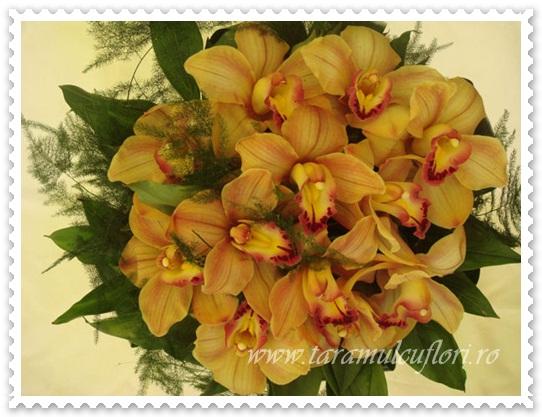 Buchete de flori din  orhidee cymbidium